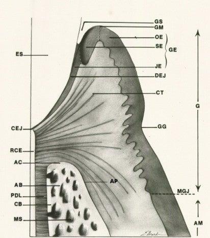 Figure 1 diagram deutsche school of dental medicine for 3501 terrace street pittsburgh pa 15261